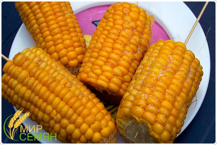 ростки кукурузы