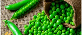 зелёный горох