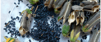 семена россыпью